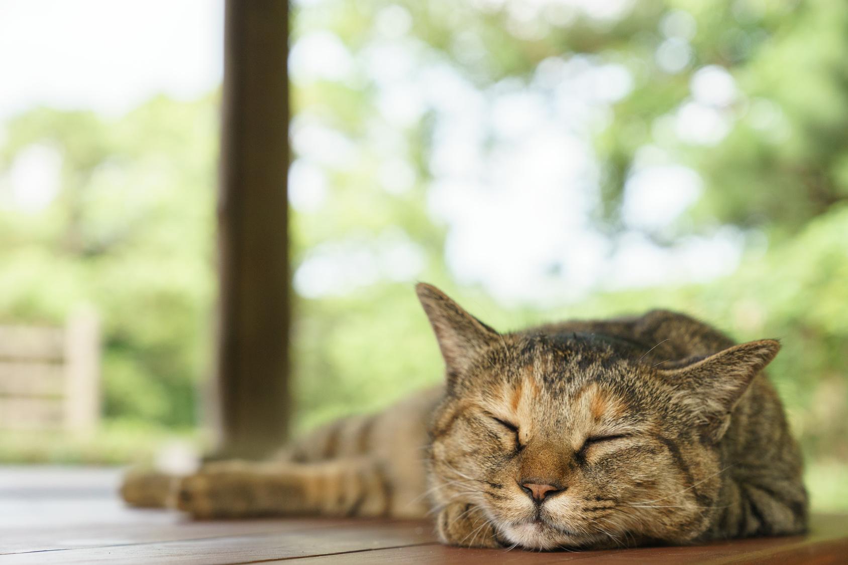 暑い夏が来る!真夏の猫ちゃんの留守番を快適に過ごしてもらうには?