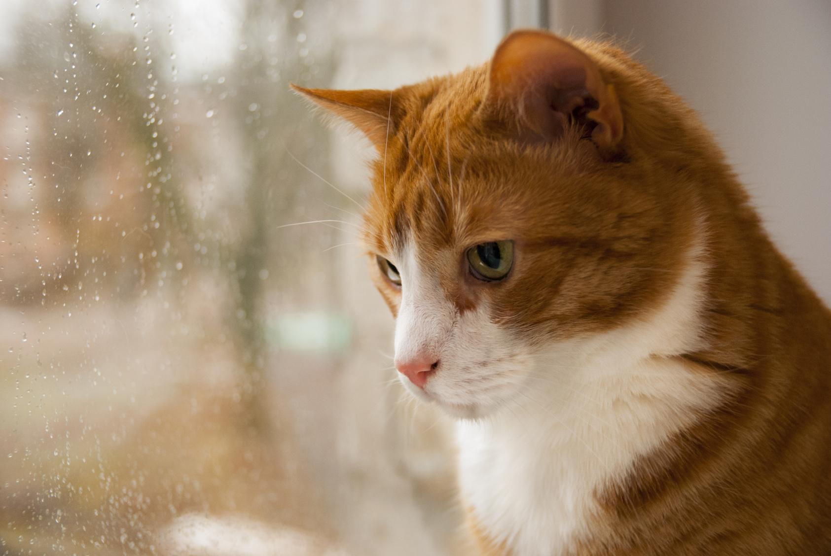 梅雨時期は猫にとっても不快…梅雨に猫がかかりやすい病気と予防法