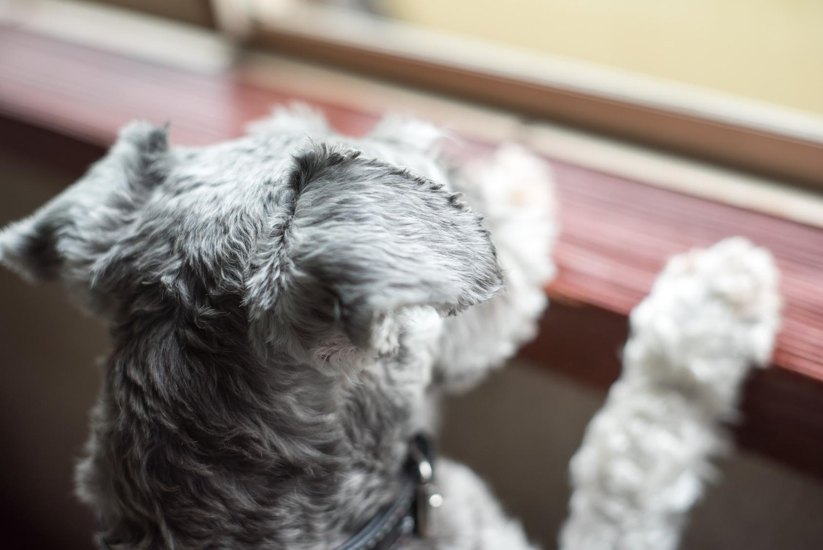 雨で散歩に行けない…ジメジメした梅雨・犬がなりやすい病気と対策