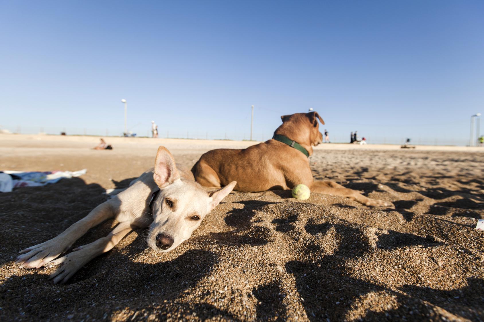 愛犬と海へ泳ぎに行こう!海へのお出かけで注意すること