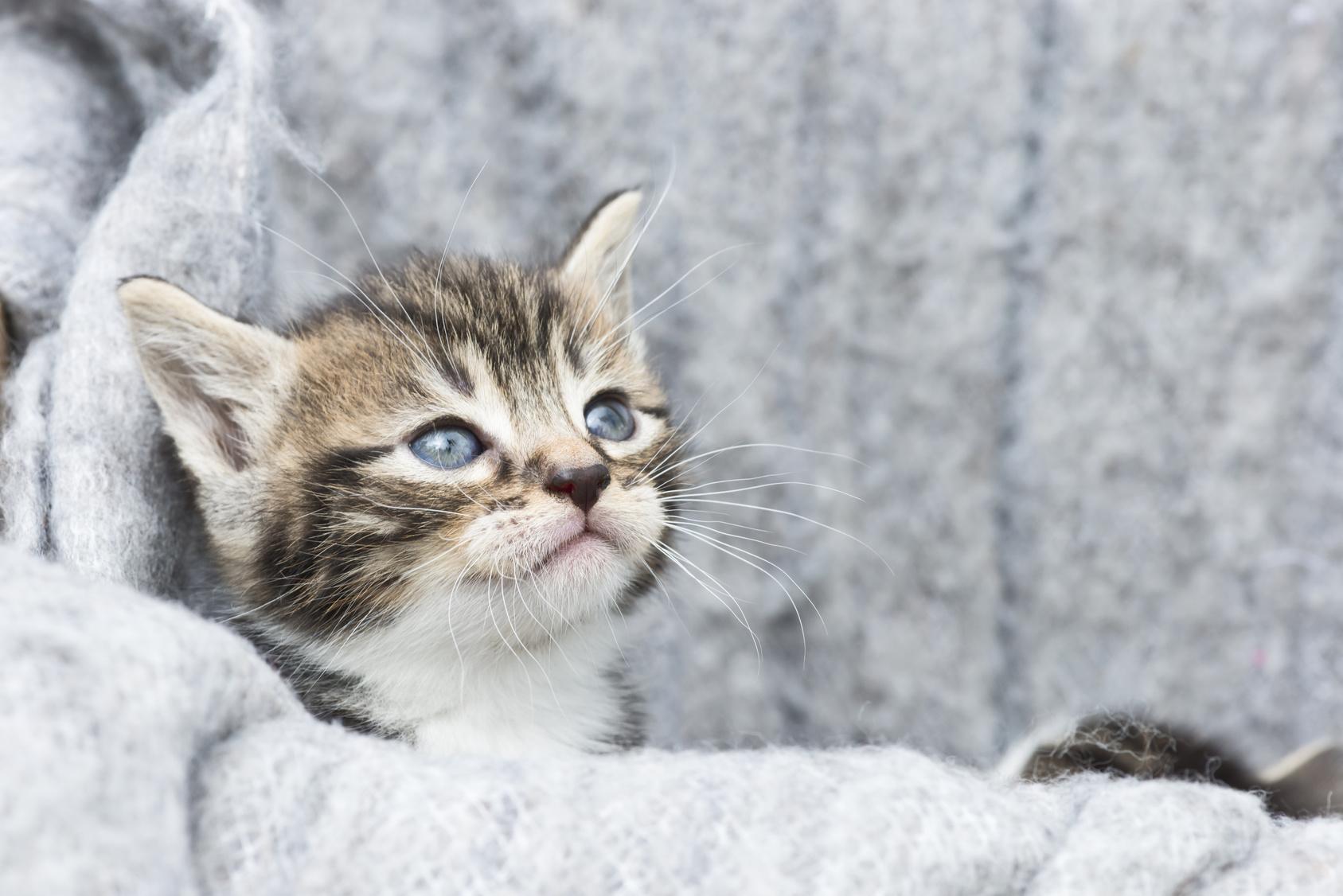 我が家に子猫がやってきた!鳴き声で分かるネコのきもち