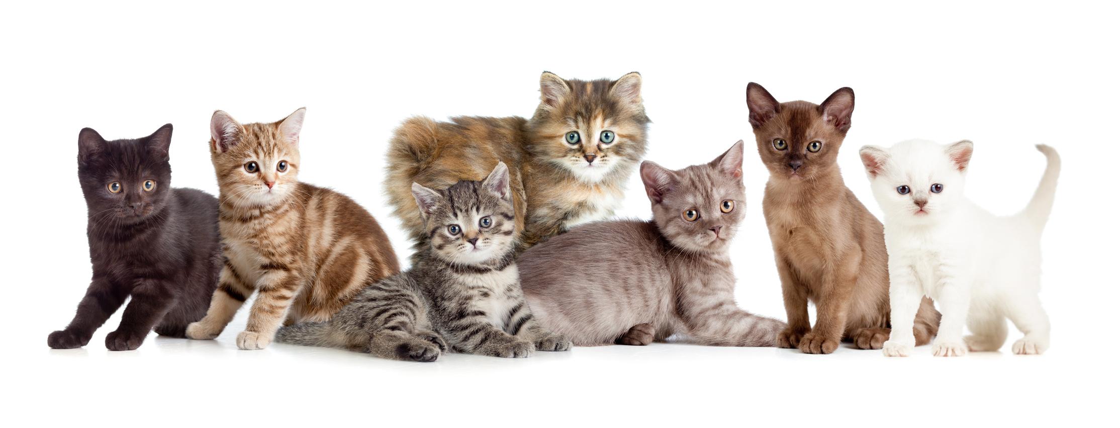 意外と知らない!?猫の基本的な特徴と体の仕組み