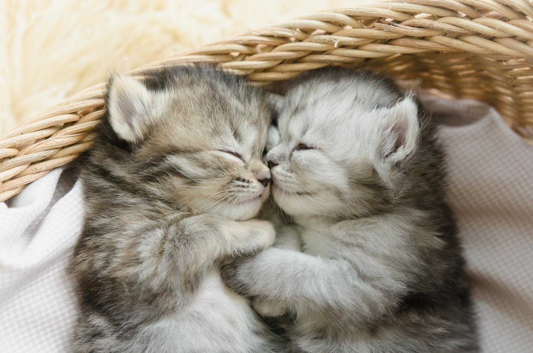 あなたの猫は何処で寝る?寝場所でわかる猫とあなたの関係性♪