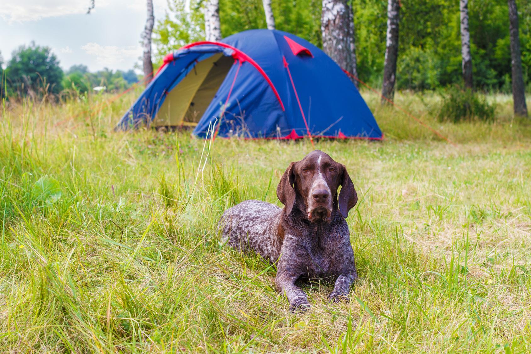 ペットとキャンプに行くならテントとコテージどっちに泊まるのがおすすめ?