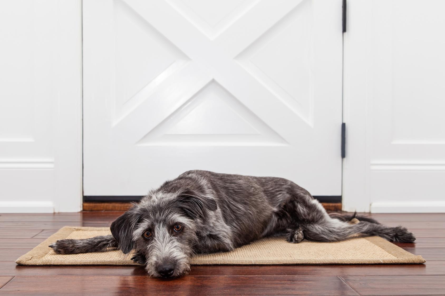 室内で犬を飼う時床に敷くおすすめなマットは?犬のことを考えたマット選び