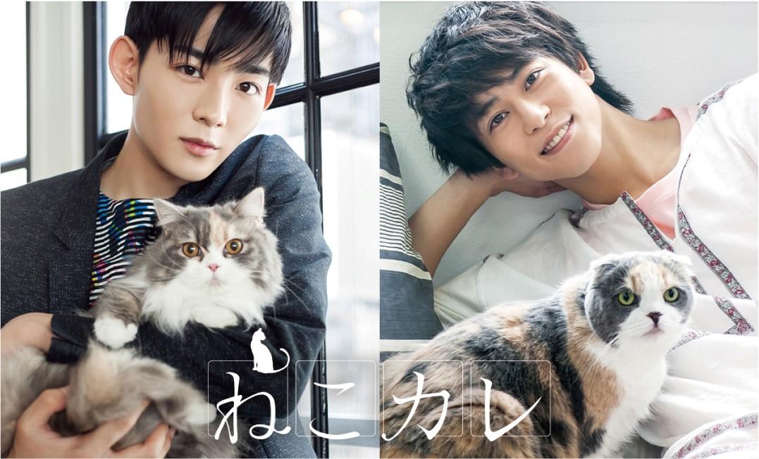 【東京発 イベント】カワイイ猫とイケメンたちのコラボ写真イベント「ねこカレ」開催!