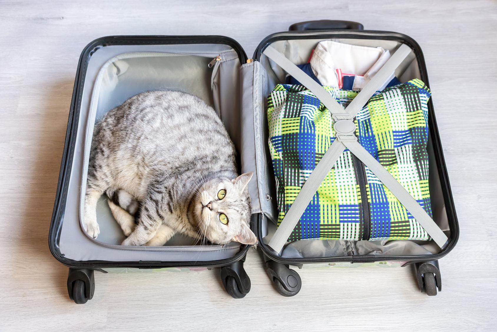 猫を飛行機に乗せる前に…しておいてあげたい準備とケア