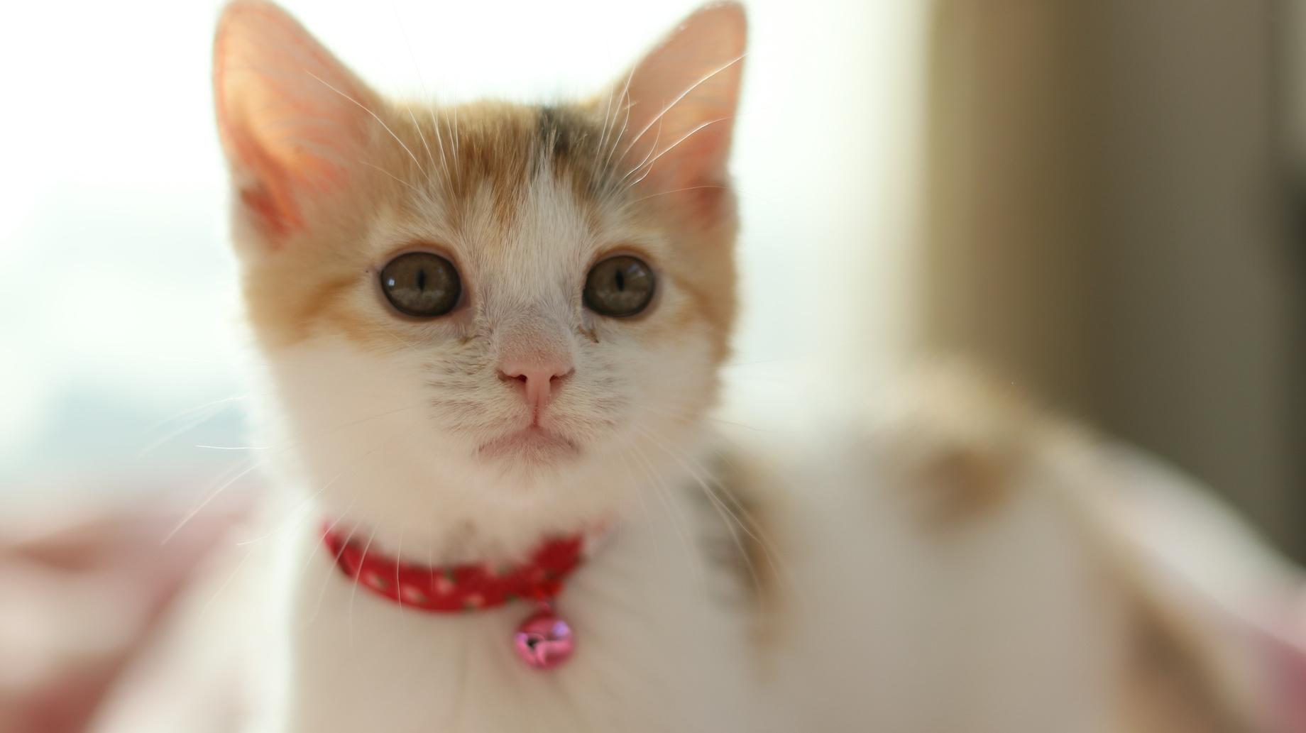 猫のイメージといえば首輪の鈴?首輪に鈴をつけるメリットとデメリット