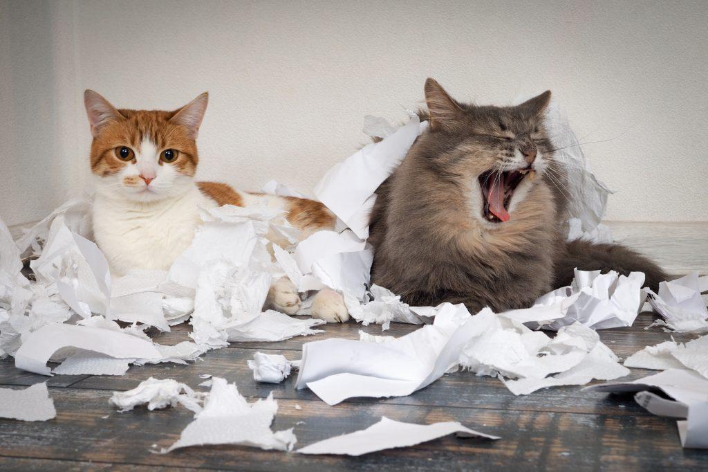 猫のしつけは犬のしつけ以上に大変!猫の習性としつけの方法 | ペットタイムズ