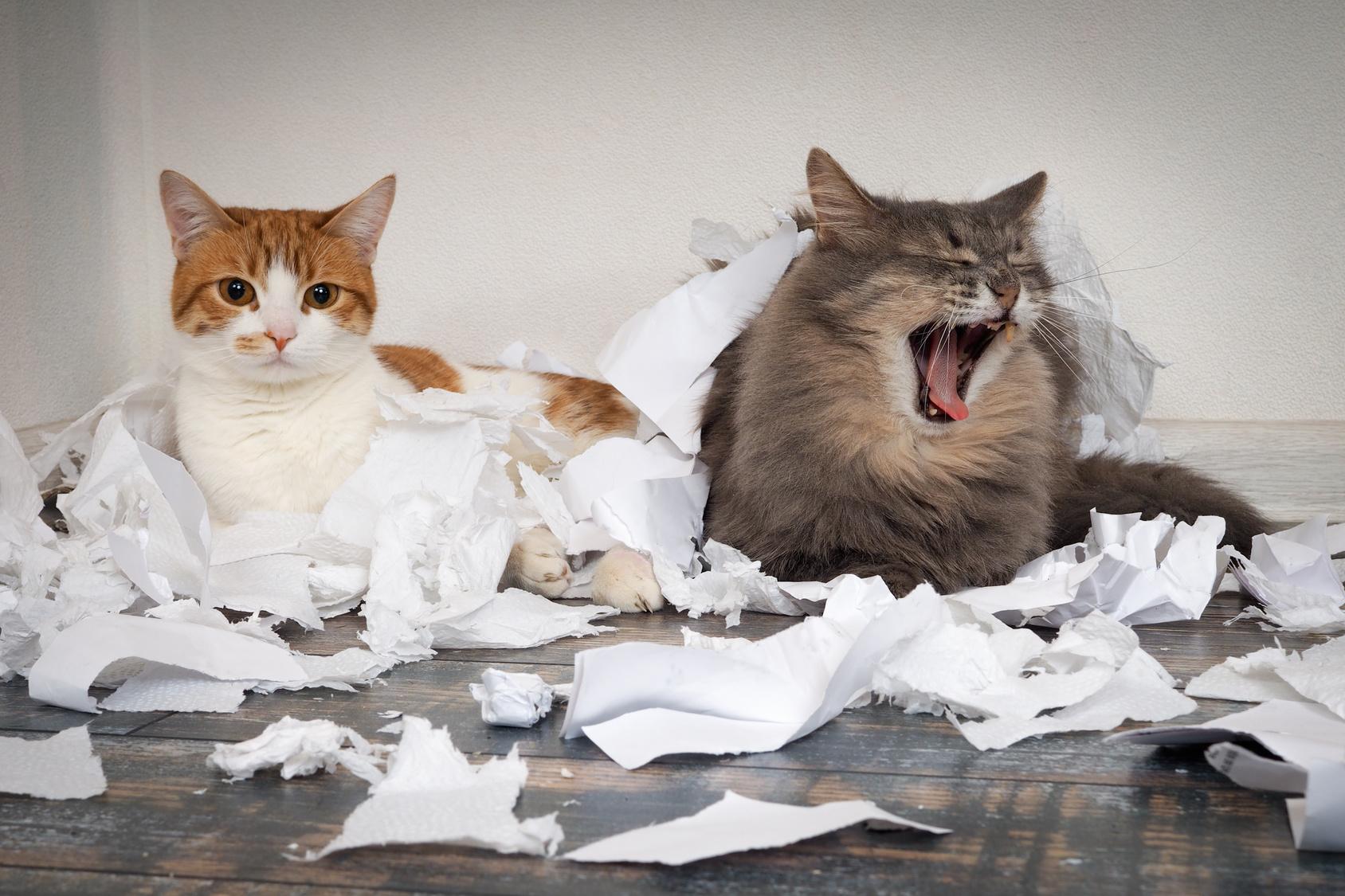 猫のしつけは犬のしつけ以上に大変!猫の習性としつけの方法