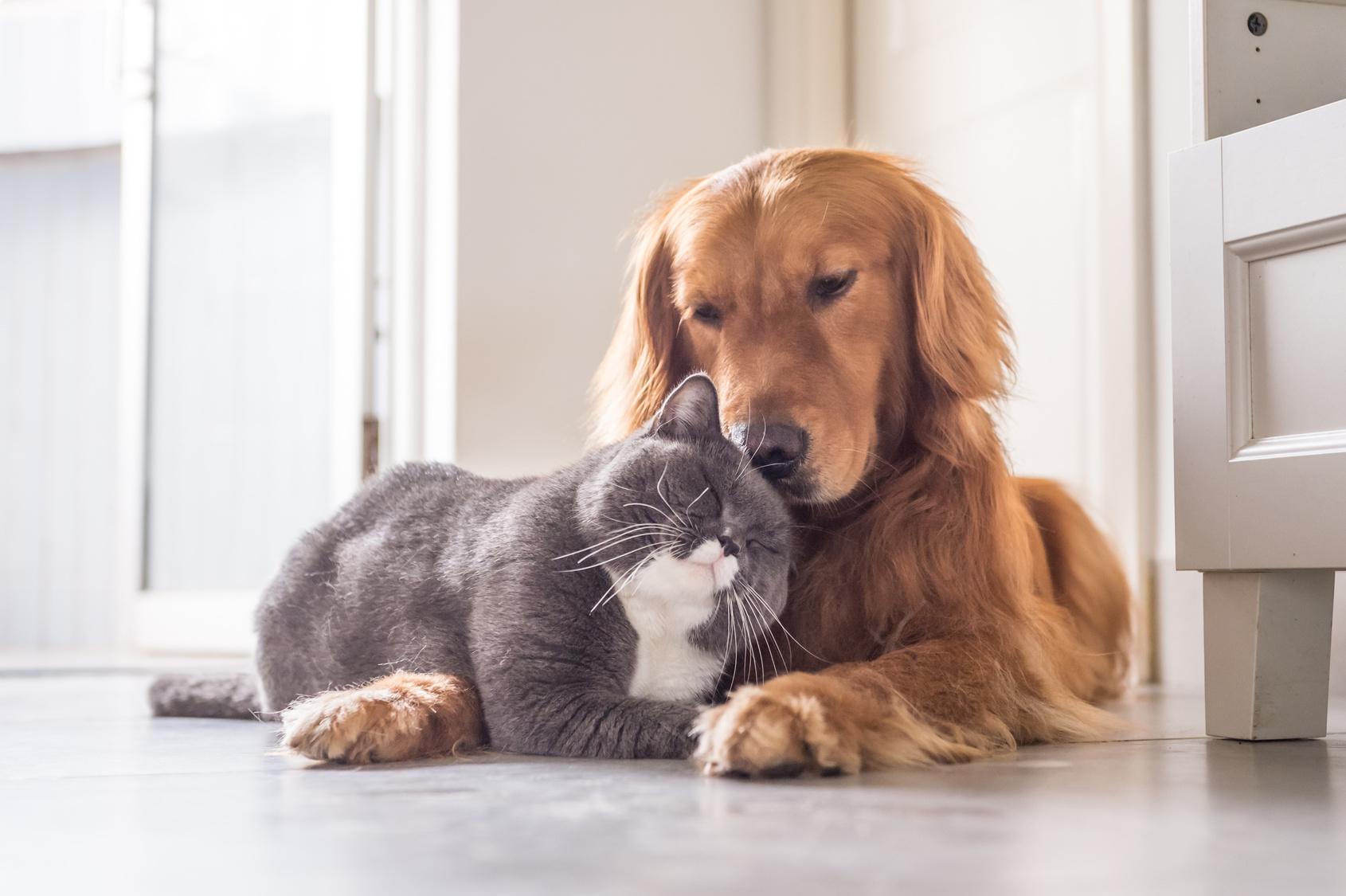 せっかくなら仲良くさせてあげたい!犬と猫を同時に飼うときのポイントと注意点
