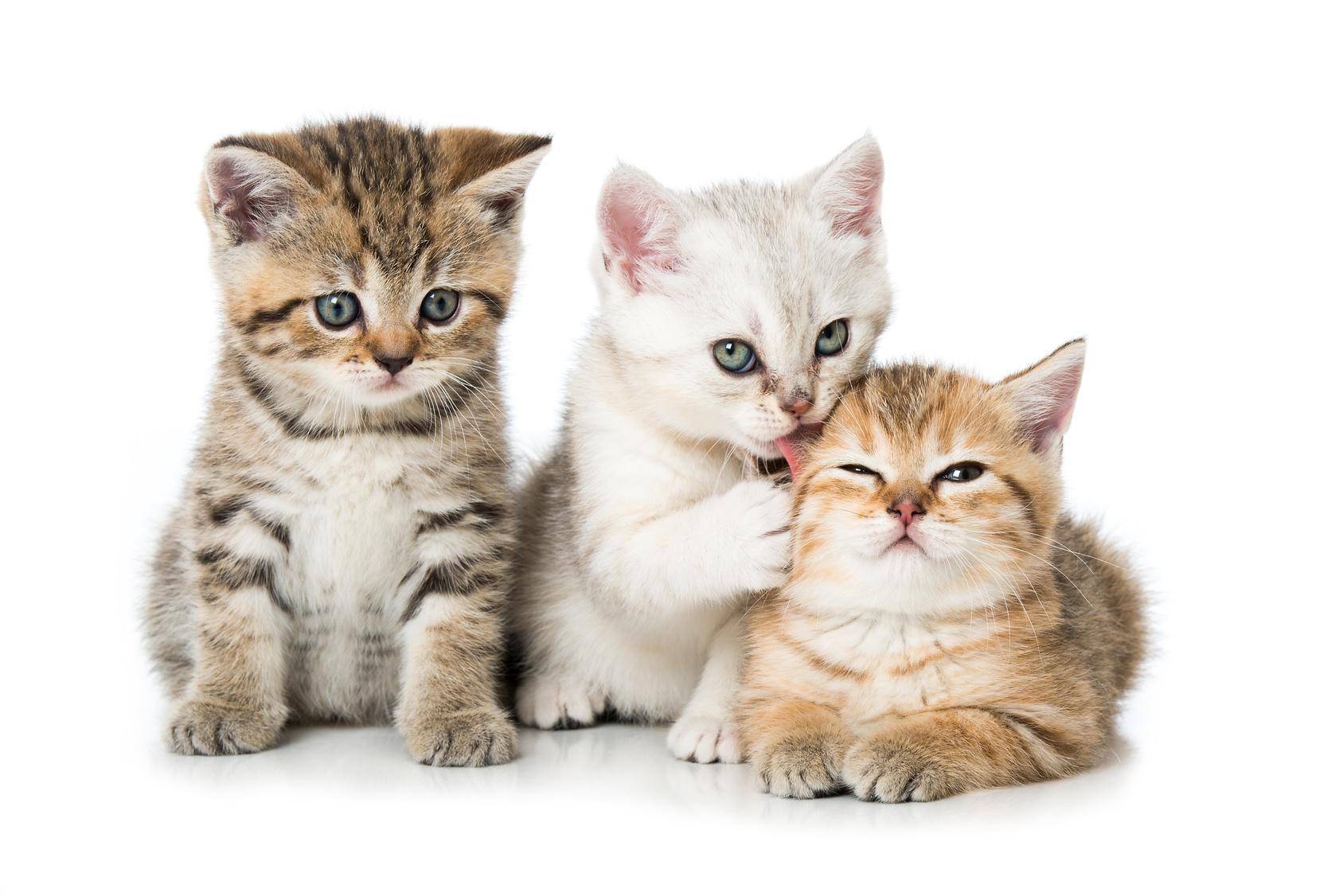 猫の性格は毛の色や柄で違う!?ツンデレ猫はどの猫ちゃん?