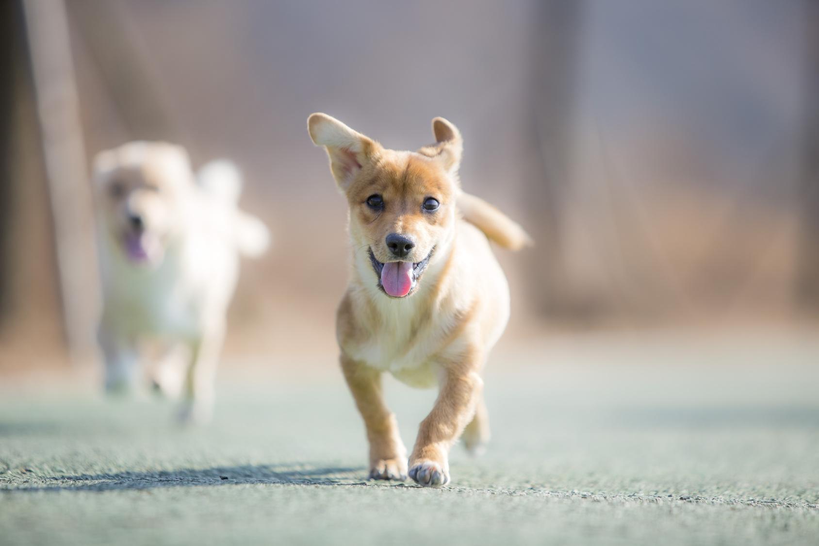 """あなたはどっちのタイプの犬と暮らしたい?""""ゆったり犬""""と""""アクティブ犬"""""""