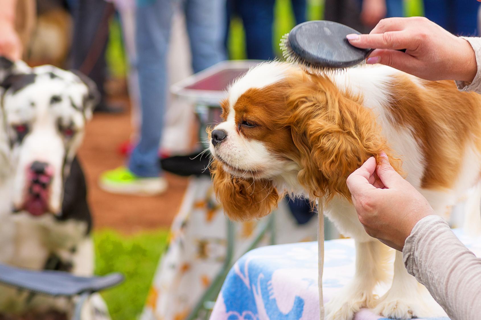 愛犬の健康をサポート!犬のブラッシングが持つ重要な役割とは?
