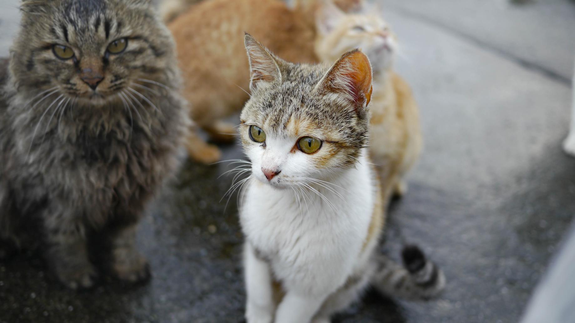 野良犬・野良猫を拾って飼い始める時にまずやるべきコト