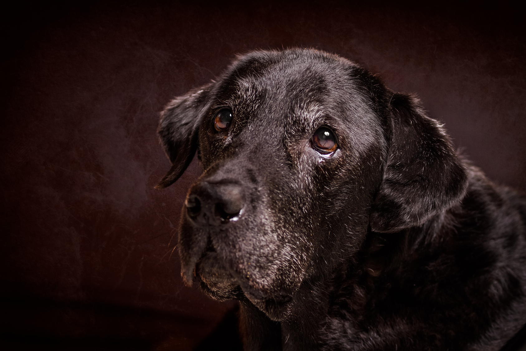 犬も歳を重ねれば白髪になる!?ワンちゃんの白髪の対策・予防方法