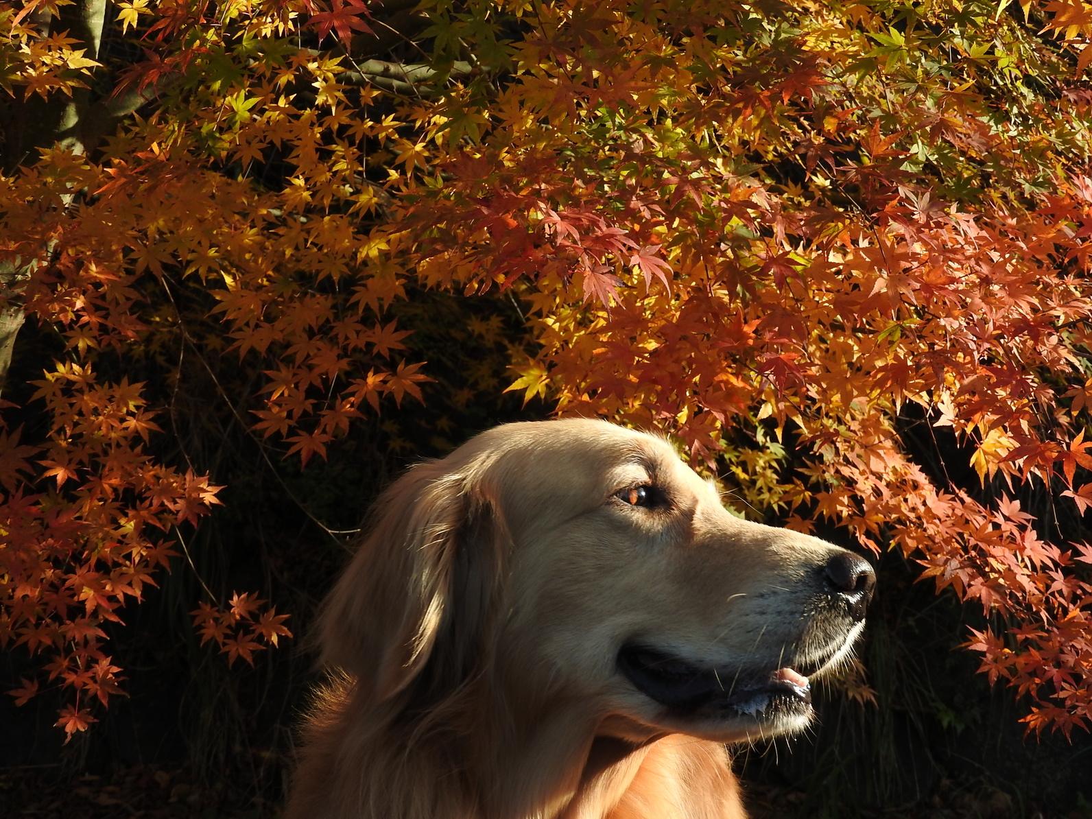 犬と一緒に出かけたい!紅葉の名所3選:関東編