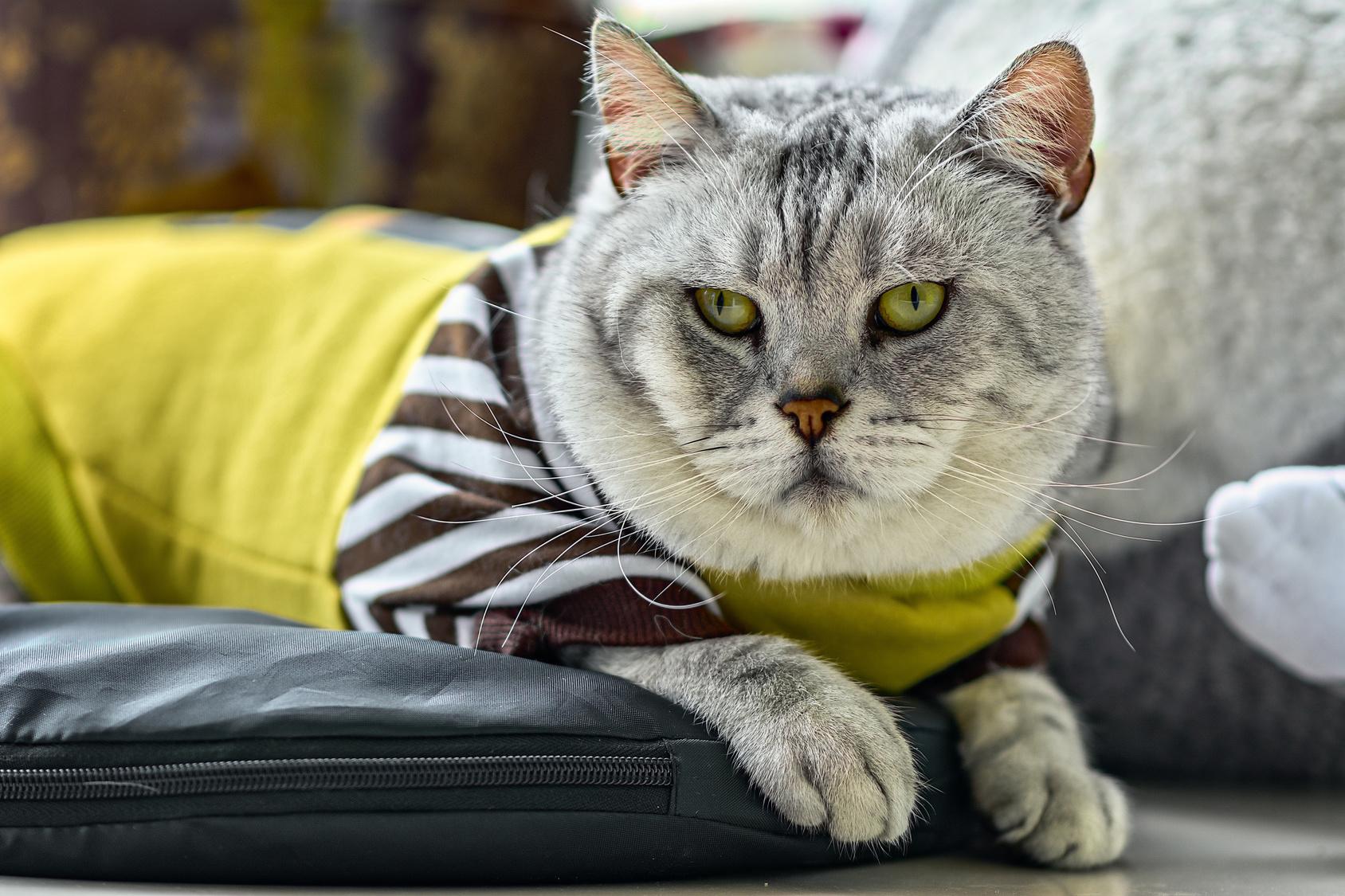 着せてもOK?猫に服を着せるタイミングと、猫×服の相性について