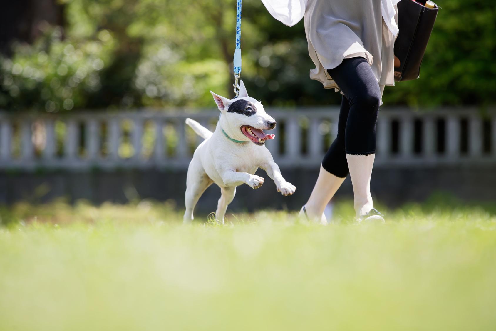 犬とお出かけする際に気をつけたいトラブル・注意点とその対策
