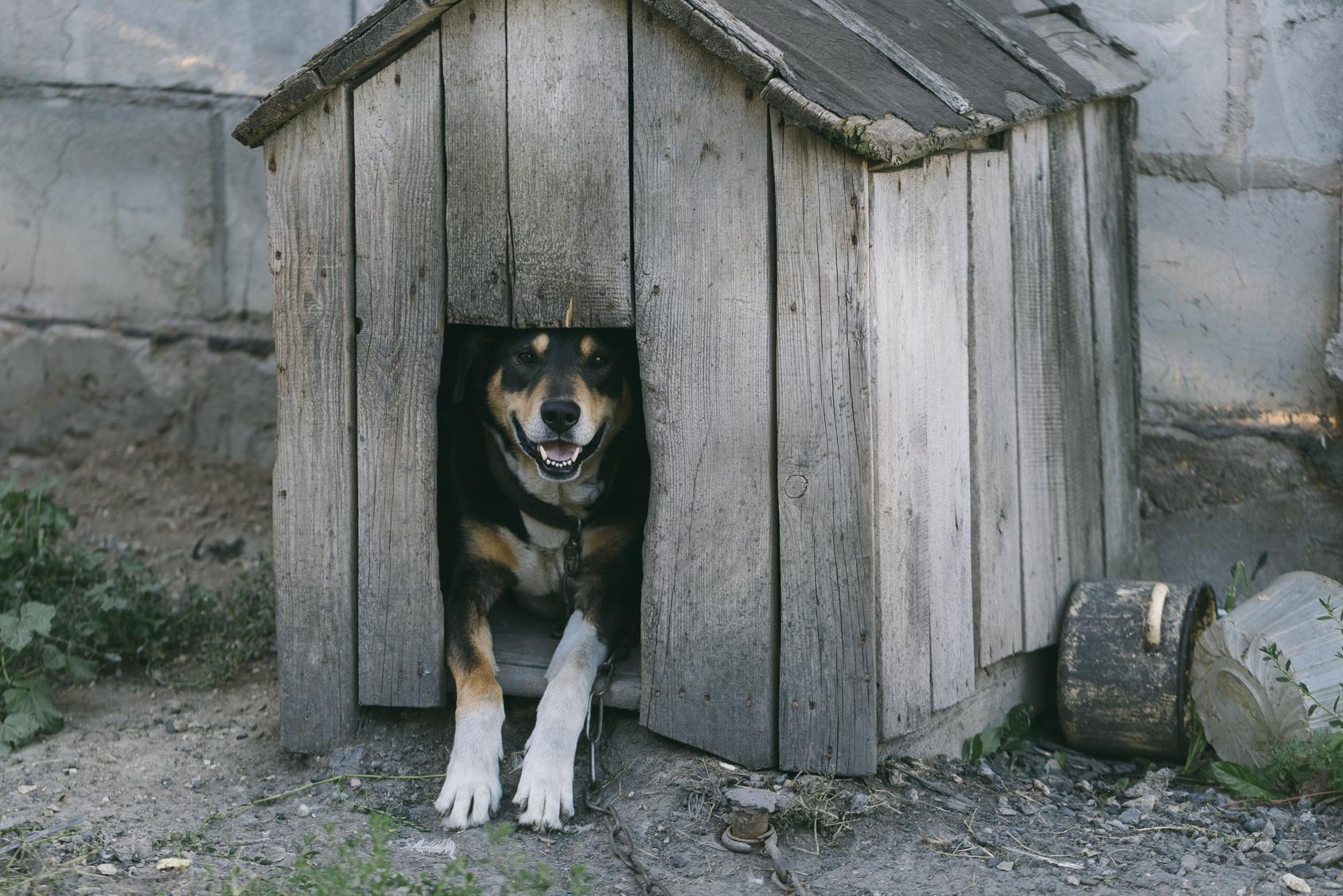 犬も幸せ&ご近所さんにも迷惑ゼロへ!外飼いの犬のしつけのポイント