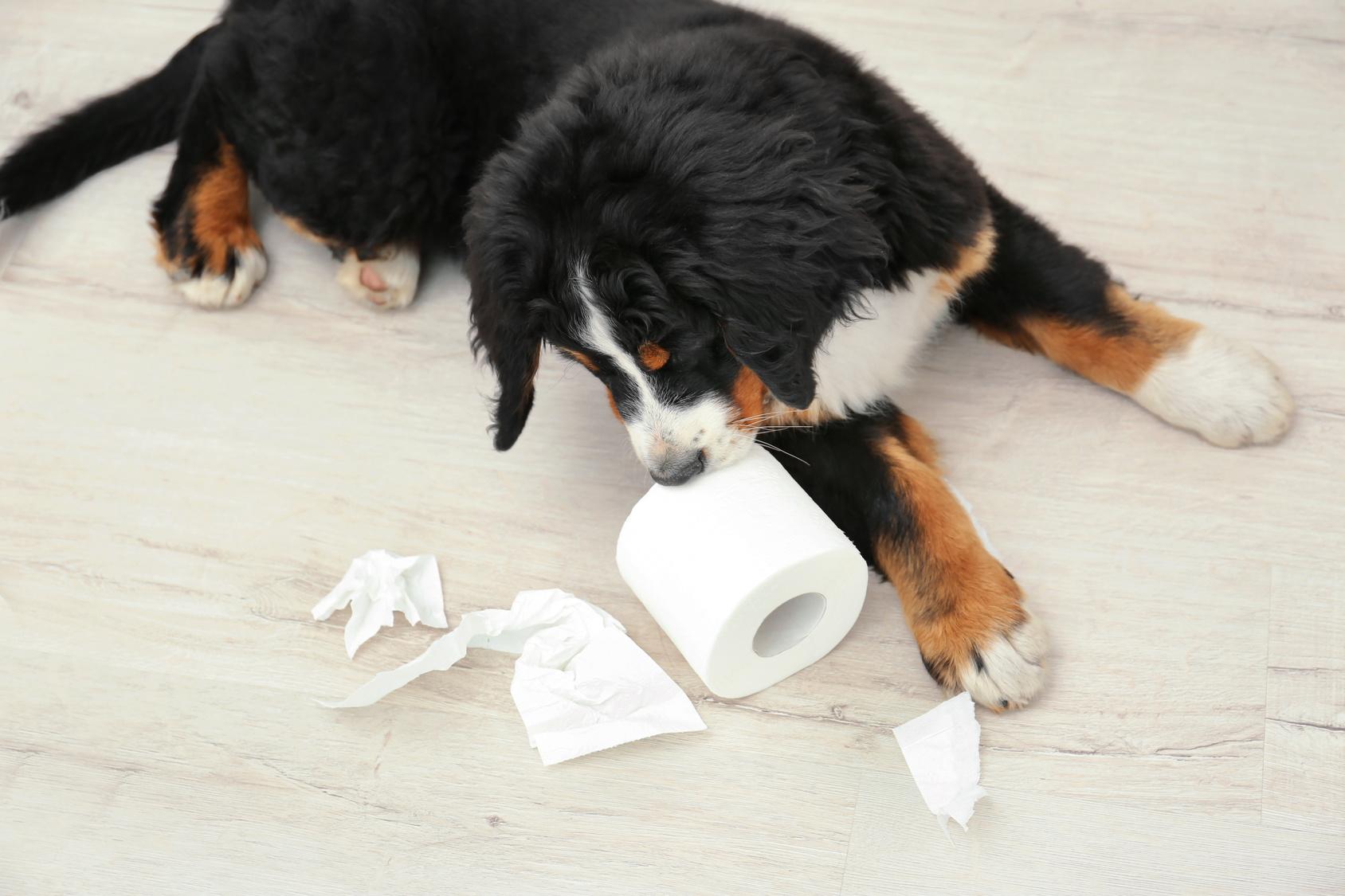 コツさえ分かればこんなに簡単!犬のトイレトレーニングのポイント