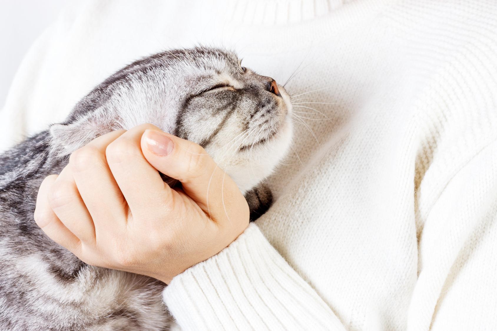 一人暮らしで猫を飼うときに心がけておきたいポイントとは?