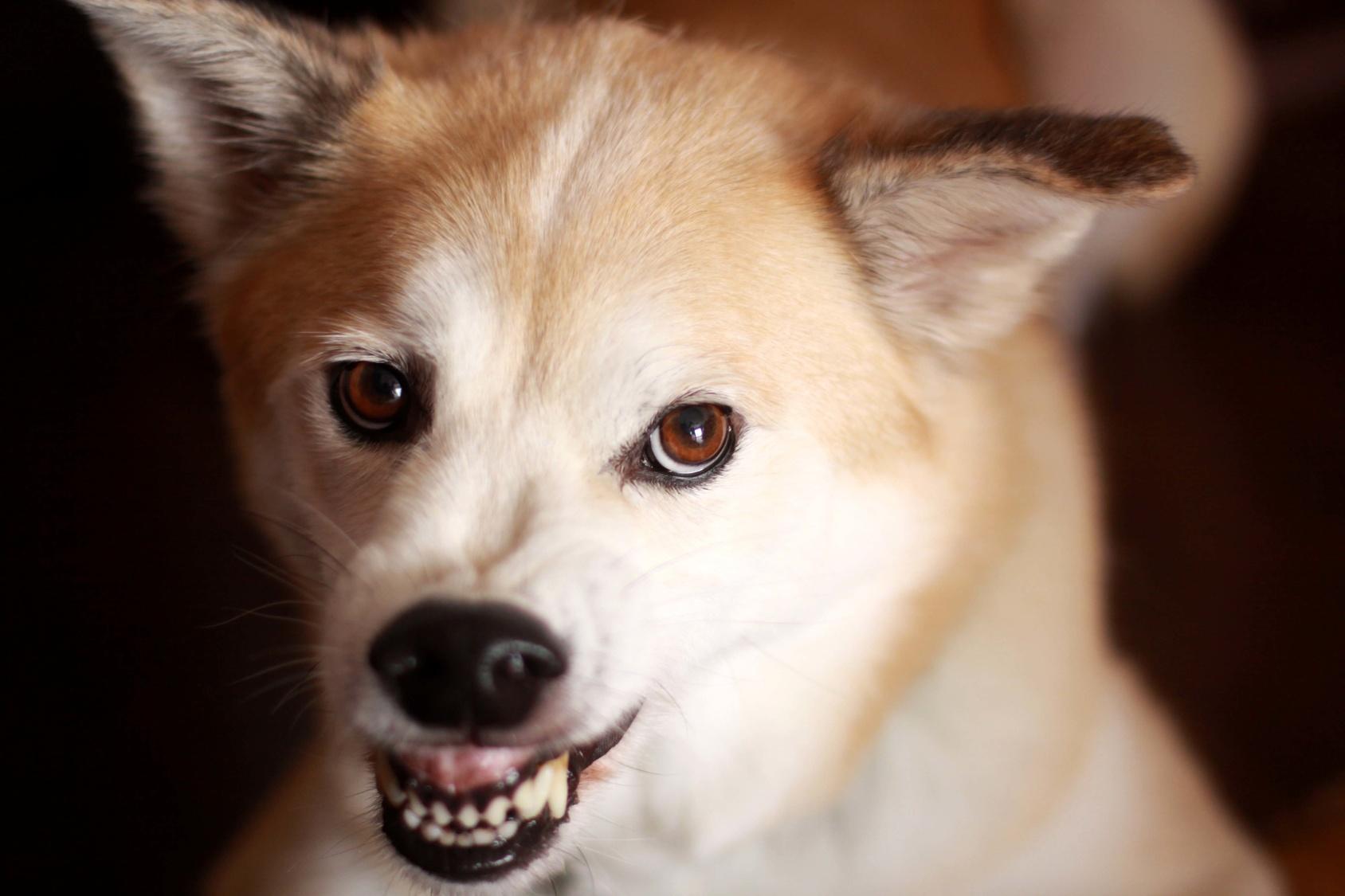 犬にも認知症はあるの?