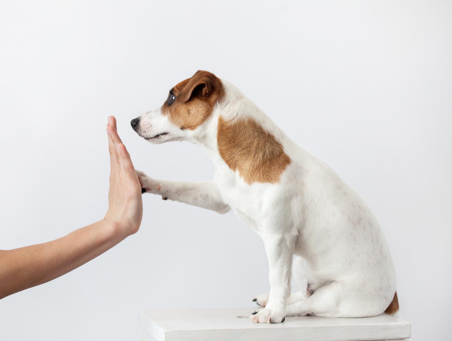犬、猫のしつけで1番大切なこと、知っていますか?