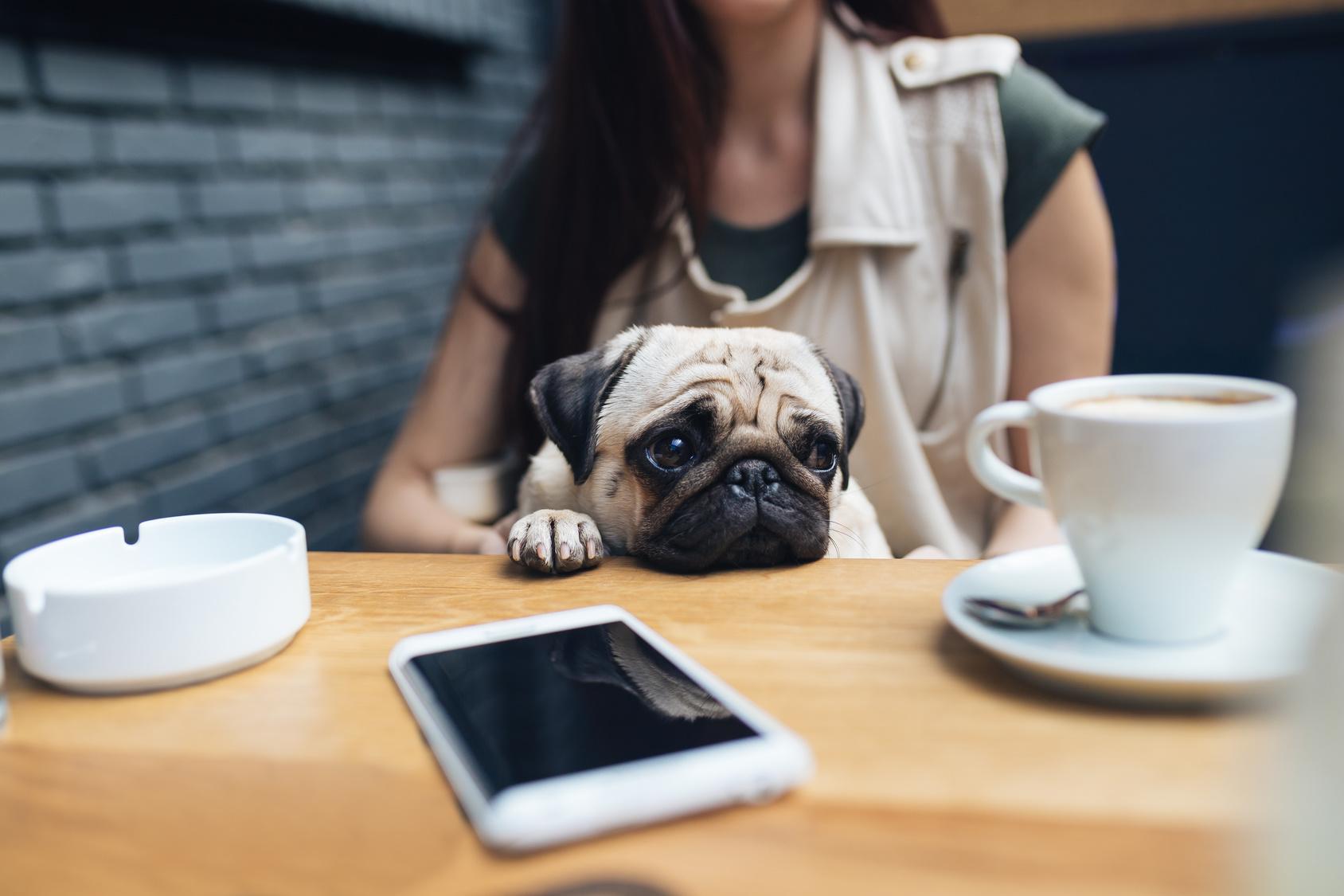 愛犬と店内で食事をしたい!大阪のおすすめドッグカフェ