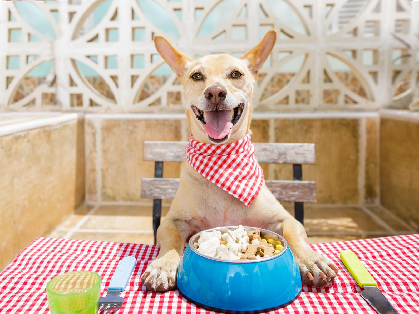 愛犬と一緒に店内で食事を楽しみたい!東京23区内のおすすめドッグカフェ