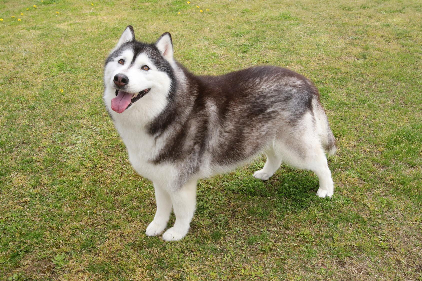 ワンワン大好きアンケート調査~愛犬とのコミュニケーションで、ドッグランを楽しむ人は約50%!その理由は?!