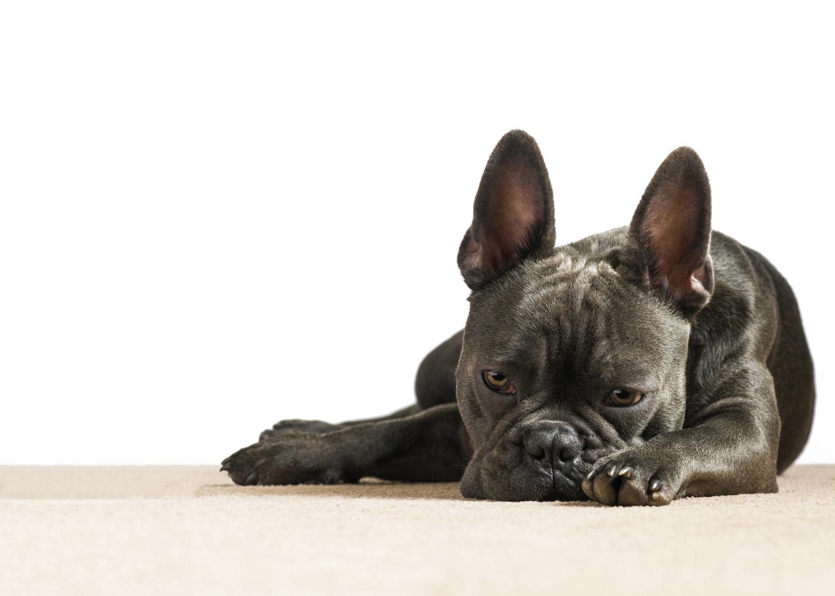 愛犬の気持ち、分かっていますか?愛犬が出す様々なサイン
