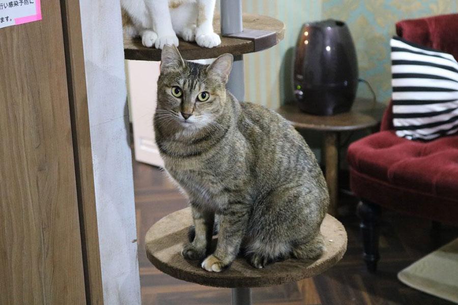 楽しみながら猫助け!?りんご猫専門カフェとは?