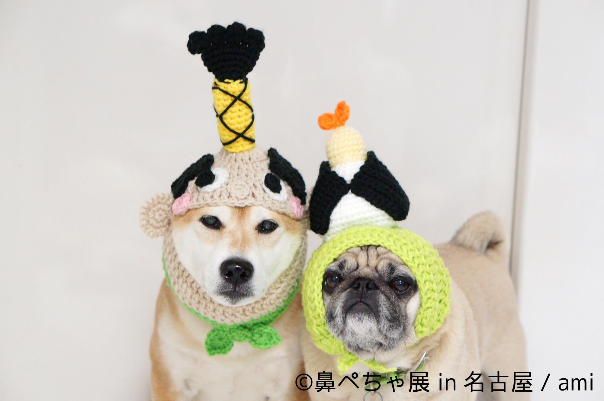 鼻ぺちゃ犬が名古屋に大集合!!来場者数2万人突破の写真展企画が開催決定!