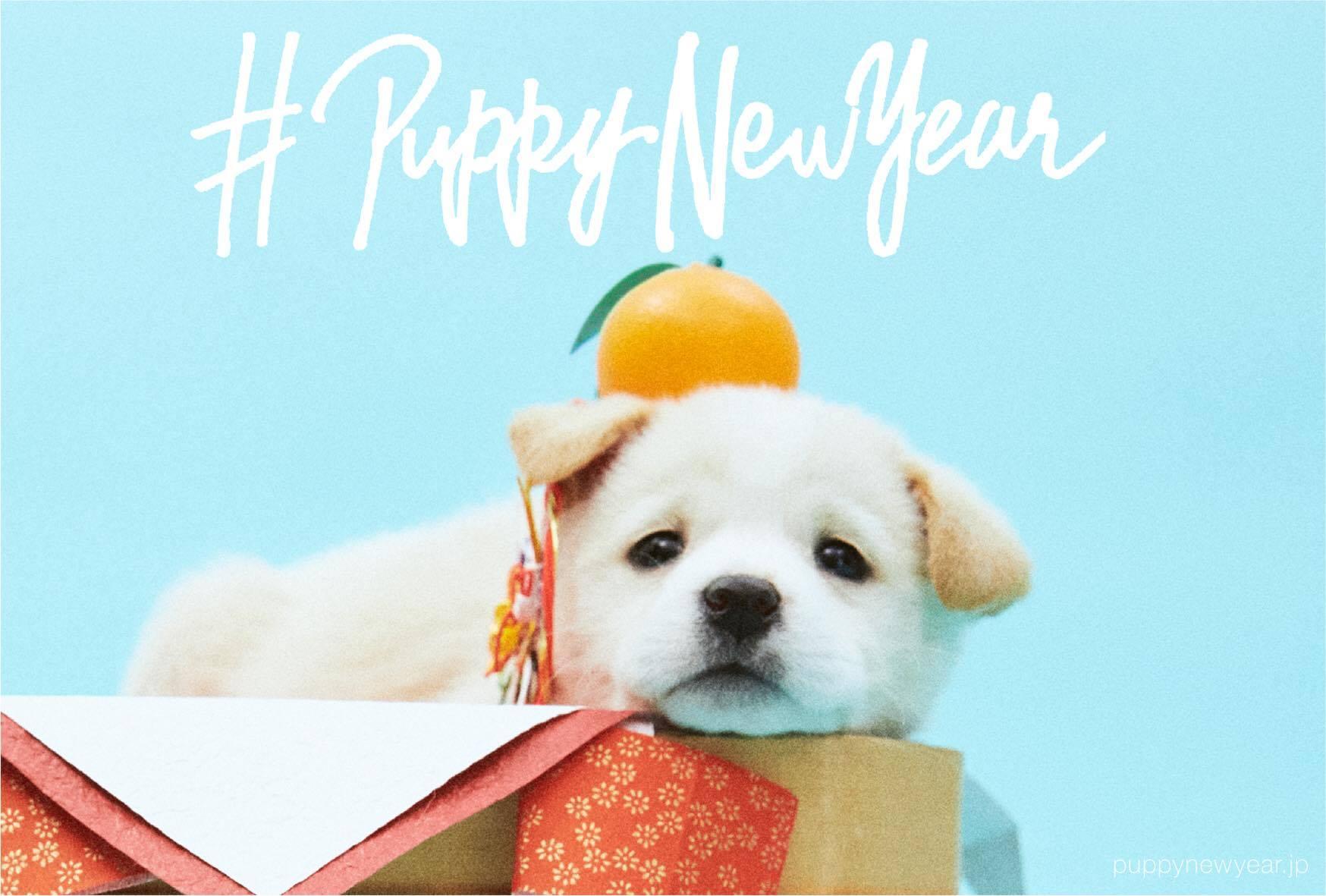 2018年は戌年!すべての犬に、幸せな新年を。年賀状で里親を探す「#PUPPY NEW YEAR」