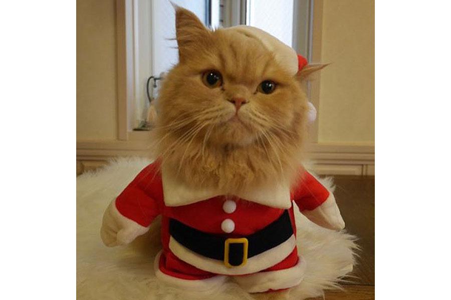 クリスマスに聞いたら笑っちゃう!?とてもかわいい「にゃんグルベル」