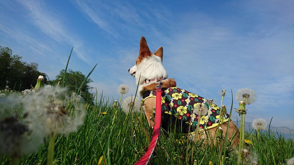 【犬とお出かけ千葉】成田ゆめ牧場は家族みんなで1日中楽しめる!