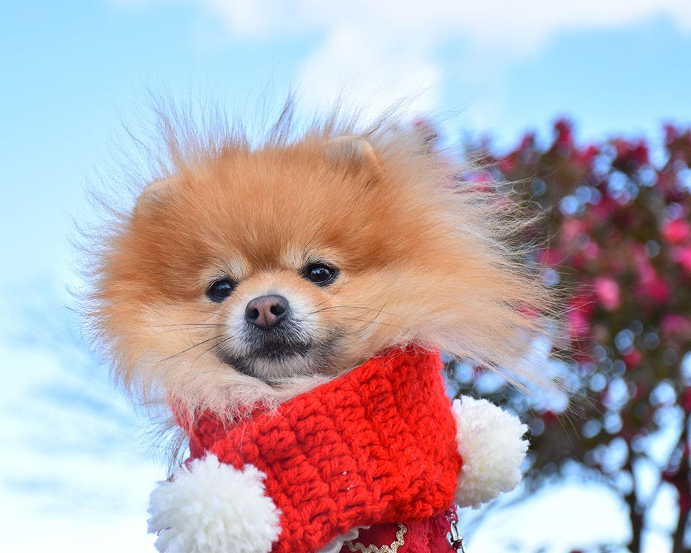 成田ゆめ牧場に行こう!期間限定で愛犬入場料無料!