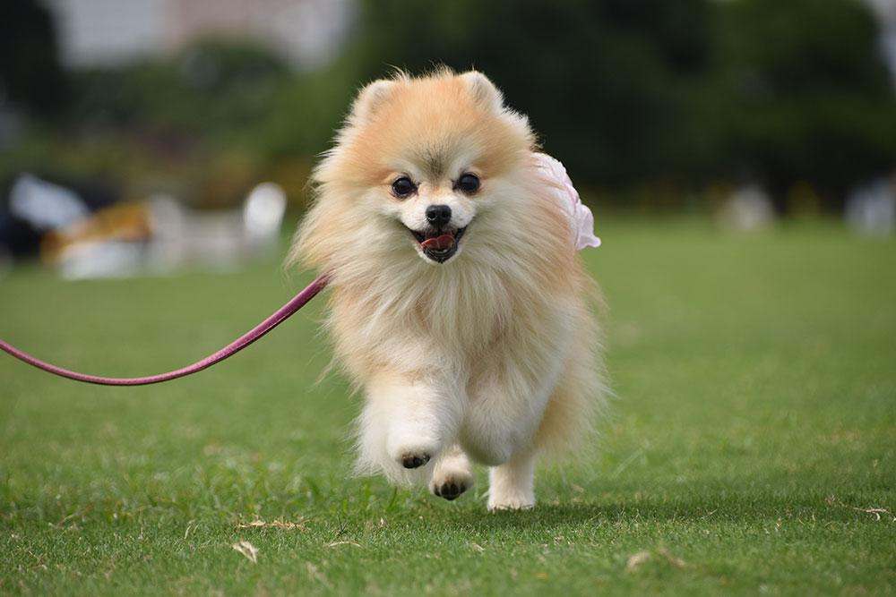 犬の社会性が大切な理由