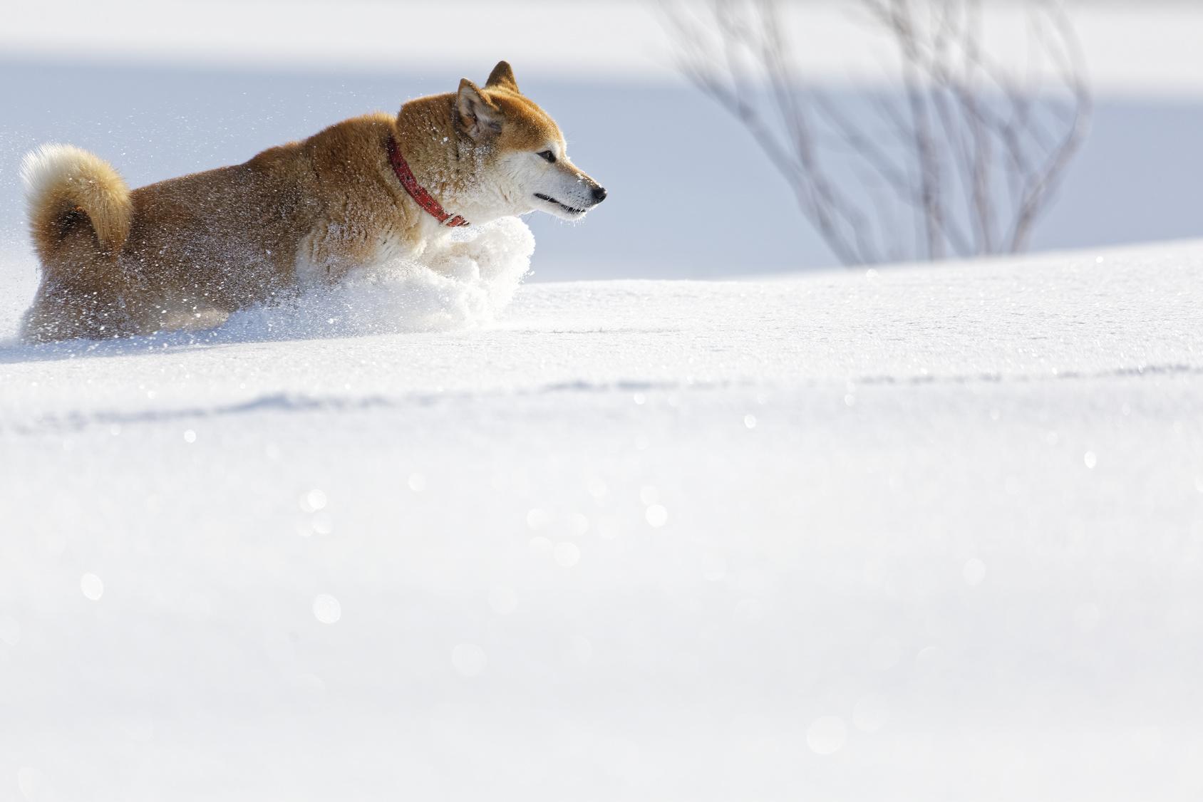 【寒い日には特に気を付けて!】犬にもヒートショックがあることをご存知ですか?