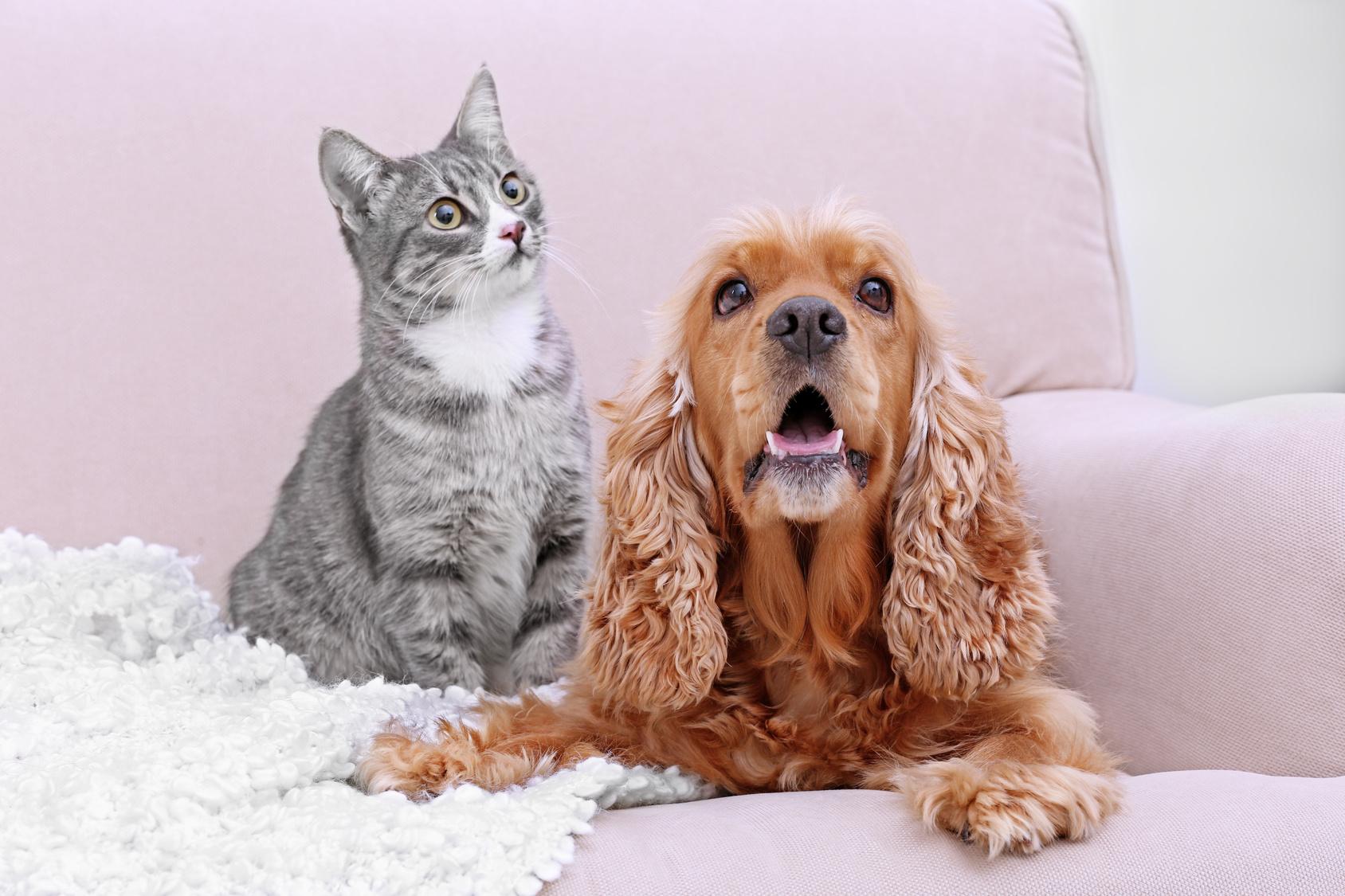 犬や猫を家にお迎えする前にするべきこと【後編】
