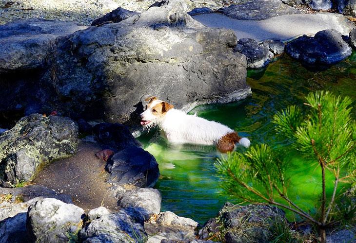 犬と宿泊できる温泉宿・ホテル3選:関西編