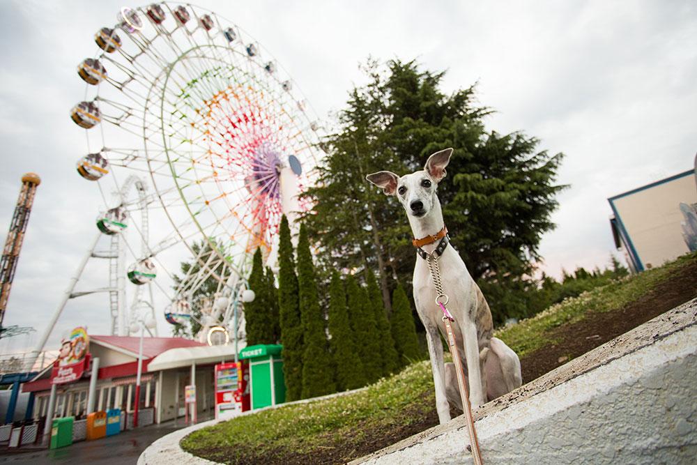 山梨で遊ぼう!期間限定で愛犬と一緒に入園可能!富士急わんわんフェスティバル♪