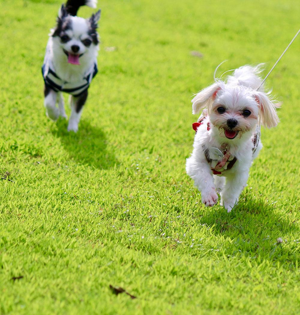 愛犬と大阪にあるワールド牧場に行こう!お得な情報掲載中