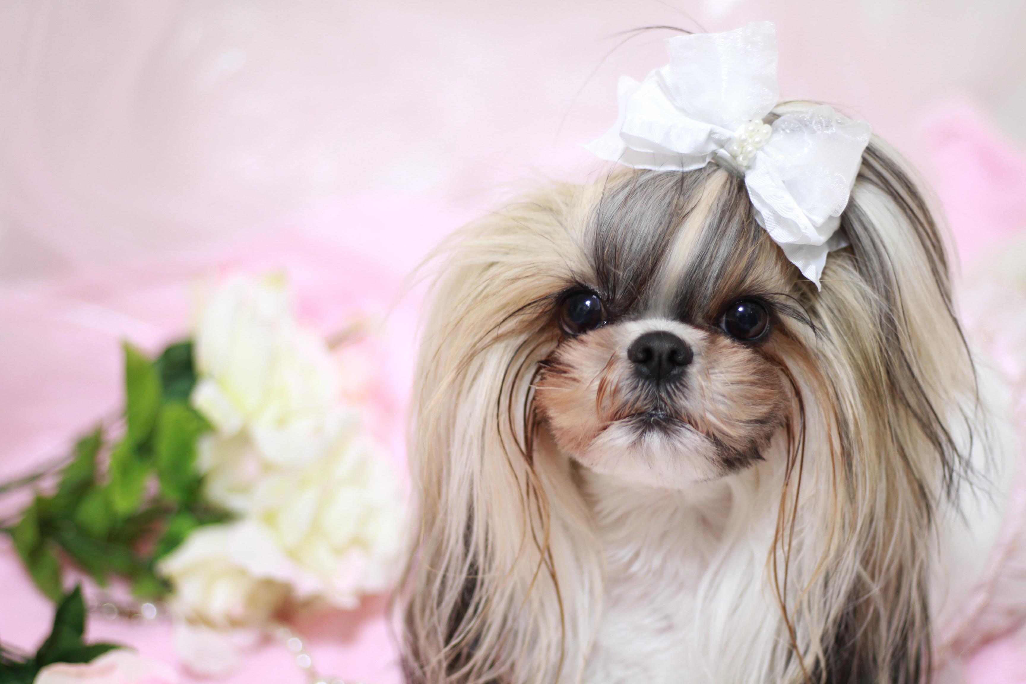 2月20日はペットを可愛がる日♪National Love Your Pet Day