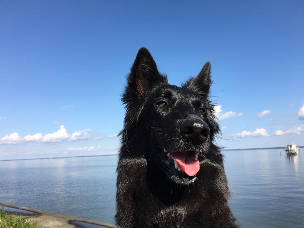 2月5日は笑顔の日!愛犬の笑顔写真を撮るコツ♪