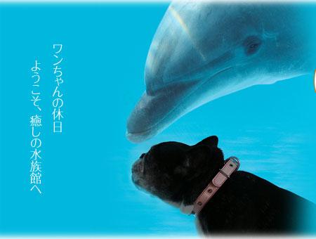 神奈川県にある京急油壺マリンパークに行こう♪犬好きなイルカと記念写真が撮れる?!