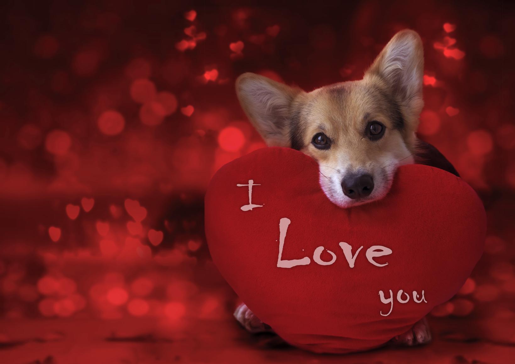 ハッピーバレンタイン!愛犬用にトリュフを作ろう♪【レシピ公開】
