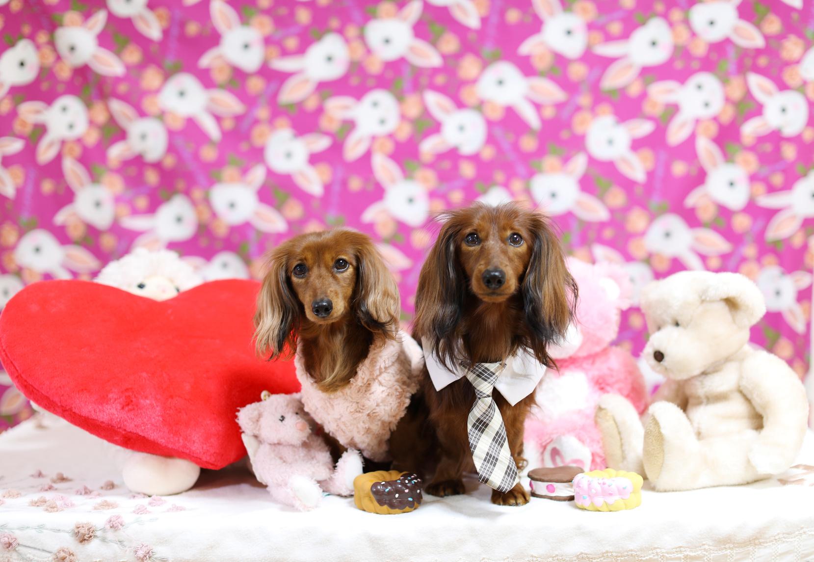 2月は犬のチョコレート誤飲が急増!チョコレート中毒とは