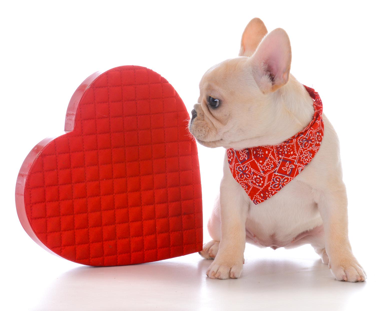 ハッピーバレンタイン!ペットと一緒にバレンタインを楽しみたい♪【レシピ公開】
